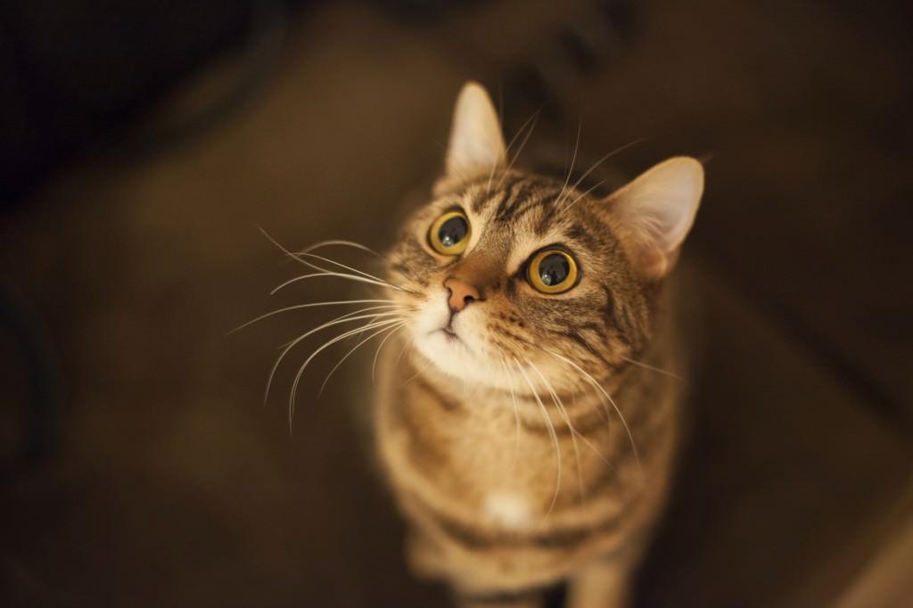 Senior Feline Wellness
